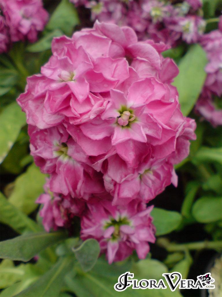 Bushes That Flower